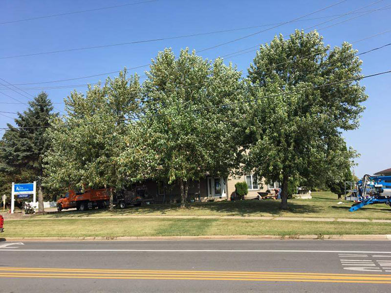 Stump Removal In Marshfield Wi Tree Service Amp Trimming